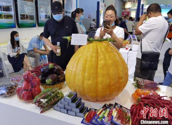 图为在第27届兰洽会上展示的甘肃农产品。 丁思 摄